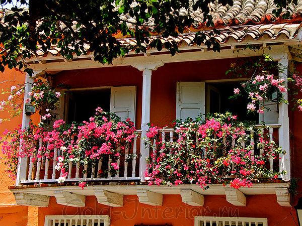 Цветы для балконов и лоджий