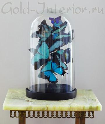 Цветные бабочки под стеклянным колпаком