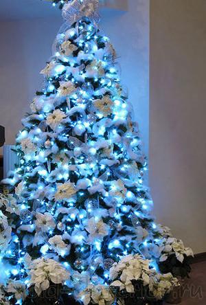 Фото новогодней голубой ели