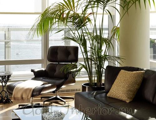 Искусственная пальма в кабинете директора