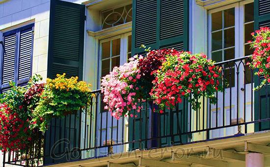 Разноцветные цветы на балконе